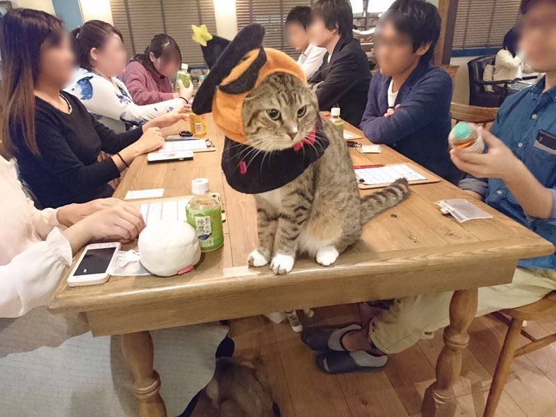 アニ街コン猫カフェSP4