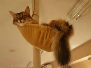 猫カフェSP写真1