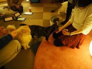 猫カフェSP写真6