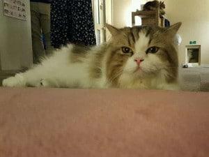 猫カフェSP写真2
